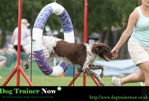 Dog Trainers: Get your Dogs Trained / Get the Latest dog Training jobs & work across UK.