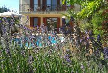 Summer time / Summer time at Lake Balaton, Hungary. Come and visit Hullam Villa b&b and enjoy the summer time!
