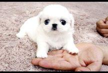 Animals and cute stuff