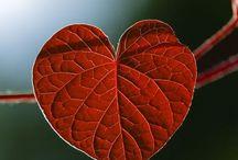 Hjärtan ❤️