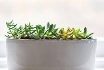 rosliny na balkonie i w domu
