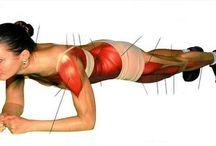 SPORTS et Musculation
