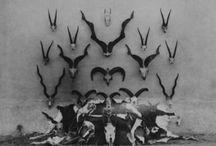 ♉ Skulls : Bones : Horns ♉