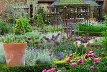 ✿Romantic Gardens / Lush, billowing garden inspirations. / by Amy Mullen