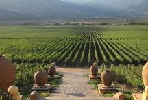 Vineyards in the World / viñas, vinos, parras...