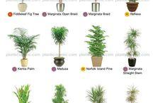 определённые комнатные растения