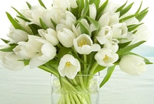 Love Love Love Tulips