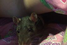 Моя крыска