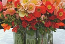 Blomster ny