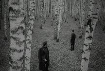 Las drzew