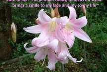 Today's Note to Self / Spiritual messages found in Nature / by Geraldine Teggelove