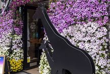KIEHL'S / Prop Studios were invited to support Kiehl's with their first ever, Chelsea in Bloom, floral installation. This years theme is 'Floral Safari'. Prop Studios took over the Kiehl's windows to complete the gold award winning project
