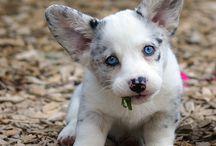 Lovely dogs <3