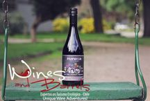 Wine travel Chile / Wine travel Chile will let you know about world's older and famous  wine manufactures.