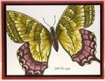 Stampin' Stuff-Butterflies / by MaryAnn Hilleary