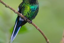 Birds  / Collected the bird pics together / by Wil Cunningham