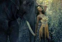 Zwierzęta w fotografii