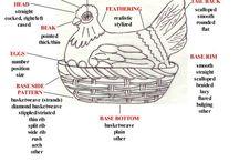 lapbook / hen