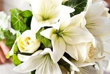 Wedding Flowers / by Jodie Spizzirri