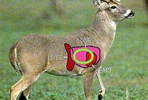 Hunting-Wild Game
