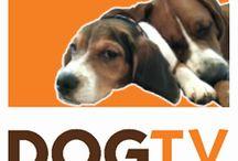 Your logo on DOGTV