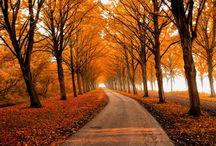 fall / by Natalie Lyon
