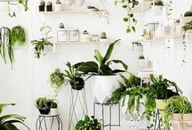 indoor plants decor - jungle in home