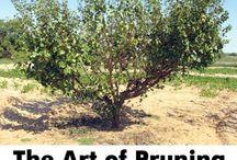 Gardening - Fruit trees