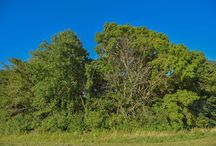 The Land Surrounding The Sycamore at Mallow Run