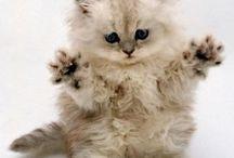 Kittyyy ❤️❤️
