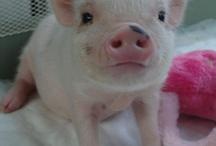 pigs!!!!!!