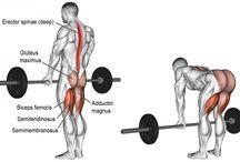 A STORA muskelgrupper övningar