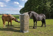 Paarden - hooi