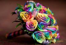 2016 Nature & Rainbow Theme Wedding / Nature & Rainbow theme wedding
