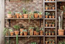 Горшечные растения / Кактусы