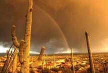 Arizona / by Craig Shuman