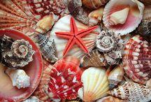 Conchas / De todo tipo, formas y colores. Me encantan / by Juana MoV