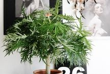 Pflanzen / Grünpflanzen