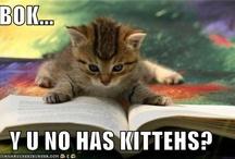 Kittehs! / by Rebecca Calvert