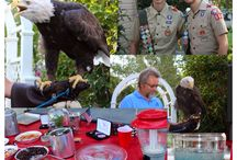 Eagle Scout / by Lori Sparks