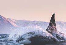 orche / il mio animale preferito...semplicemente bellissimo