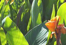 tropo plants