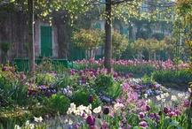 Planning My Monet Inspired Garden
