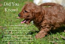 Banksia Park Puppies- Puppy Facts