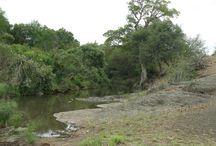 Kruger Park Landscapes / Landscapes General Photo's