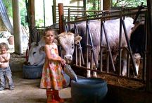 Wwoofing Farm travel with Kids