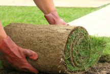 Welcome to Carabooda Lawn / Quality turf supply installation and associated products www.Caraboodalawn.com.au