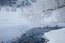 Winter Wolves In Yellowstone