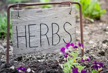 Kruiden - Herbs / Hoe groei en kweek je kruiden? Kom alles te weten over de smaakmakers van de tuin, van zaaien tot opkweken, oogsten en verzorging, leuke DIY's en inspirerende artikelen.