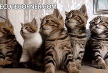 Pisicute gif
